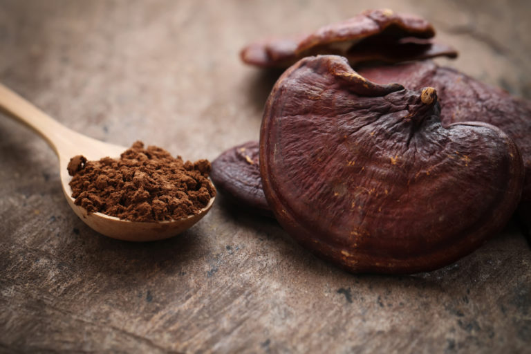 Ganoderma Lucidum Reishi: proprietà, benefici e a cosa serve